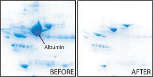 Removal of albumin reveals lower abundant proteins