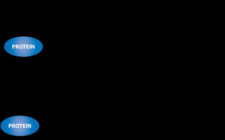 Maleimide conjugation