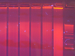 genomic dna, genomic dna degradation, dna degradation