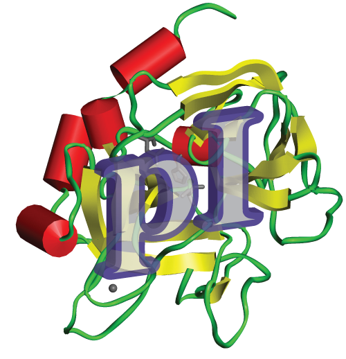 protein purification, protein isoelectric point