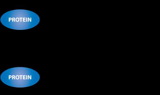 NHS Biotin conjugation