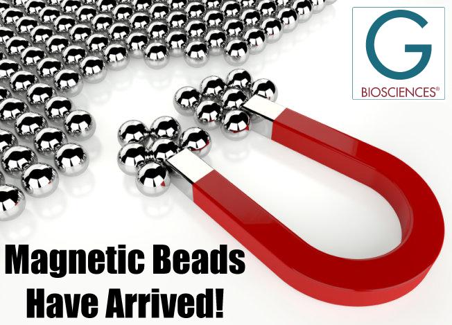 Magnetic Beads for Immunoprecipitation