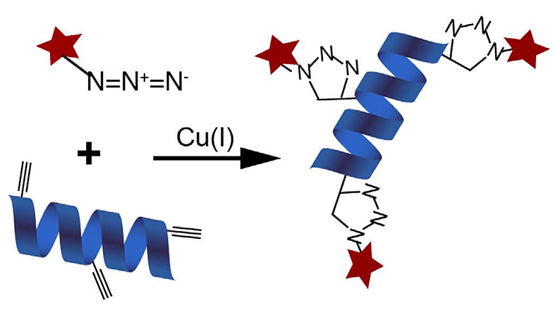 BONCAT (Bioorthogonal Non-canonical Amino Acid Tagging): a method to define the translatome
