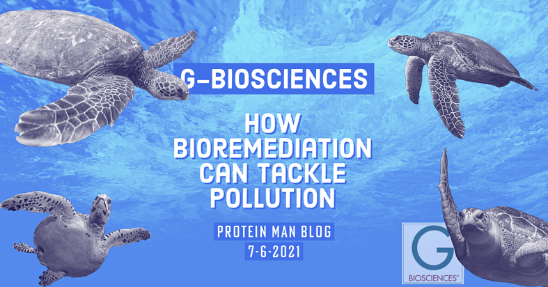 How Bioremediation Can Tackle Pollution