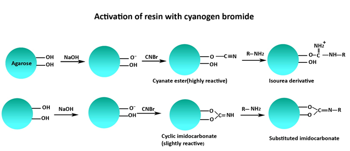 CNBr_Activated_Resin_Scheme.png