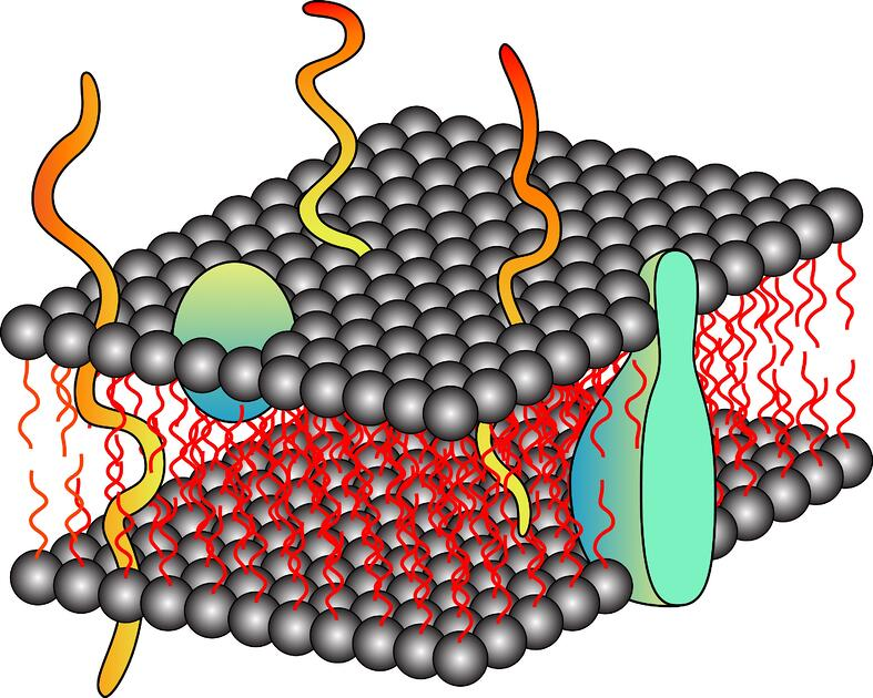 Membrane Protein Extraction: The Basics