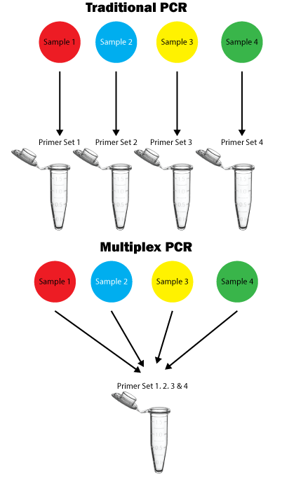 Multiplex PCR, Benefits over traditional PCR
