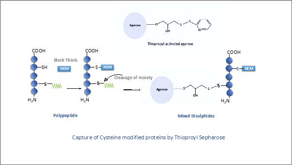 Thiopropyl Resin in the Spotlight