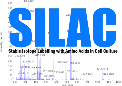 SILAC: A General Workflow for Improved Mass Spectrometry