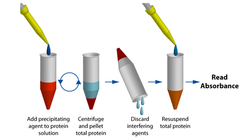 Protein Quantitation in the Presence of Reducing Agents and Detergents with UPPA™