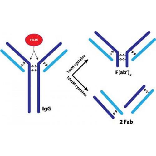 The Amazing Origins of Antibody Diversity
