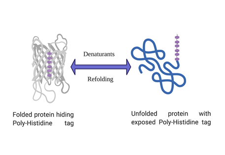 His-tagged protein expressing but not binding your Ni-NTA column?
