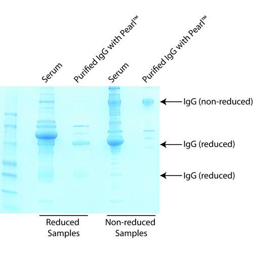Pearl™ Antibody Clean-Up Kit